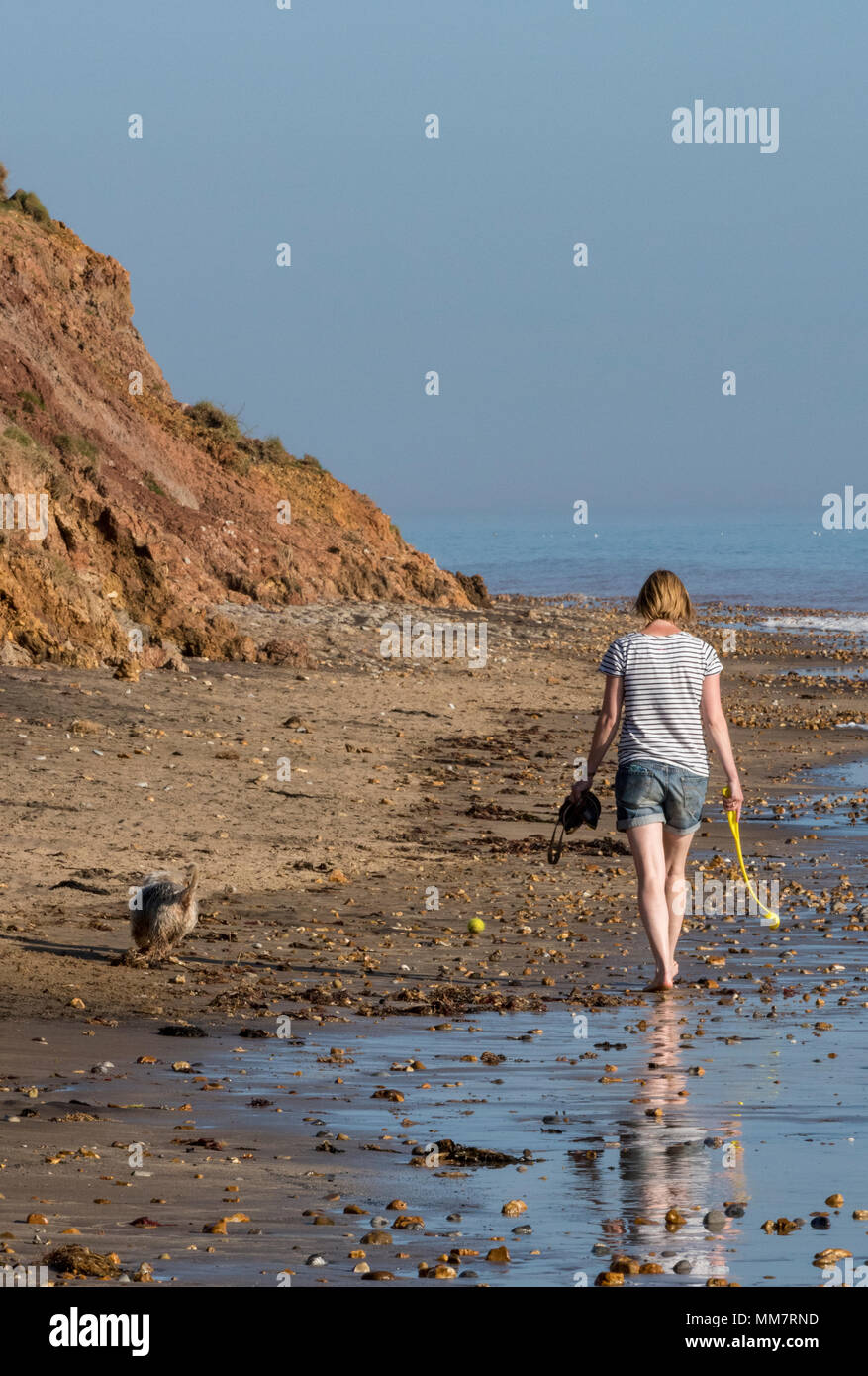 a woman wearing shorts walking along a beach with a dog in the summer on s bright and sunny day at the seaside. walking the dog and mans best friend. - Stock Image