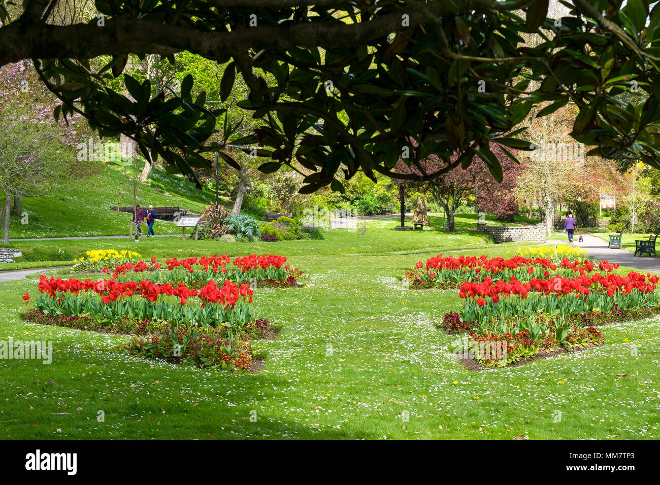 Flower beds in Trenance Park in Newquay Cornwall. - Stock Image