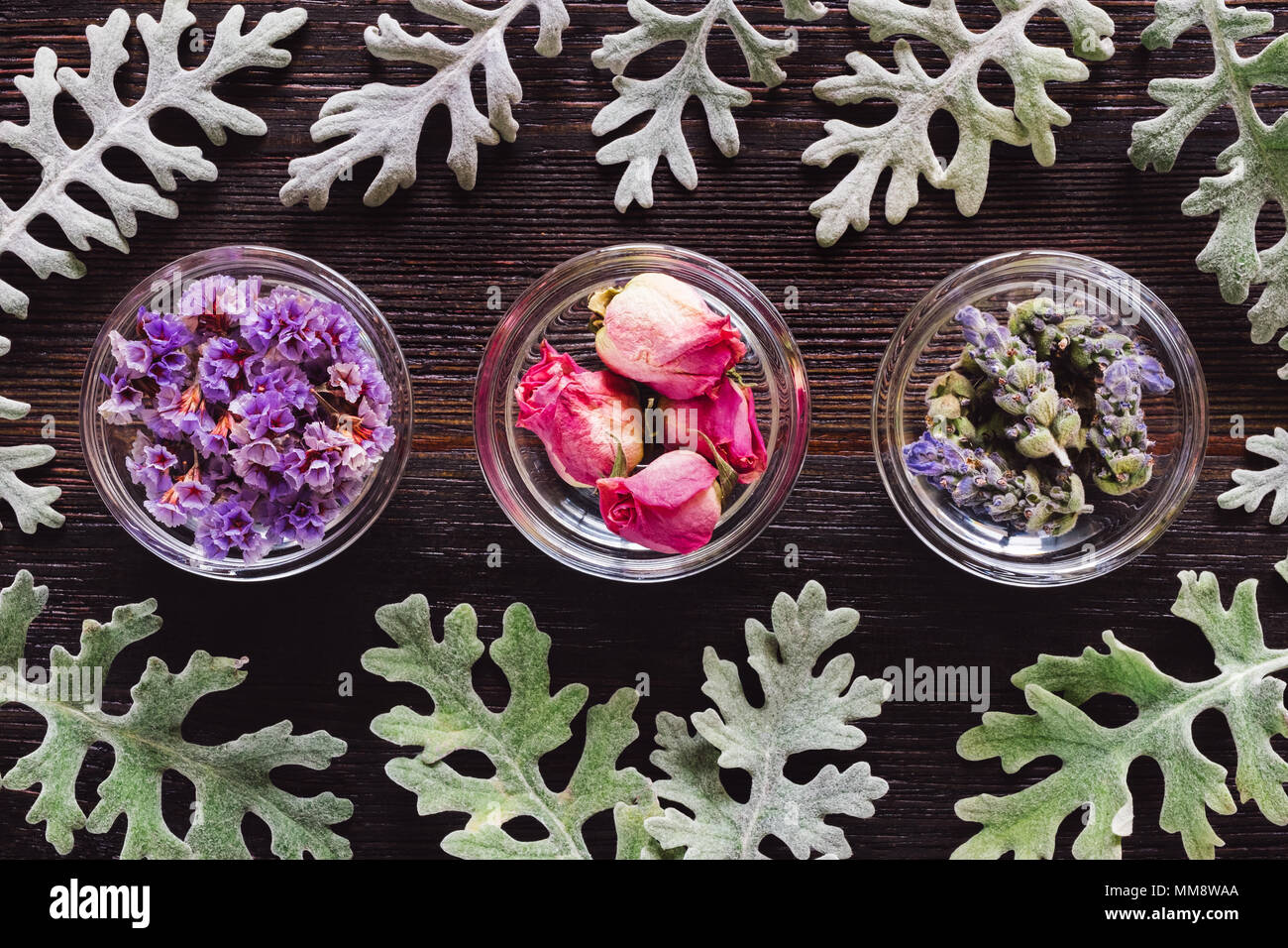 Bowls of Dried Lavender, Rose, and Sea Lavender with Dusty Miller, Aligned and Centered on Dark Table with Space for Copy - Stock Image