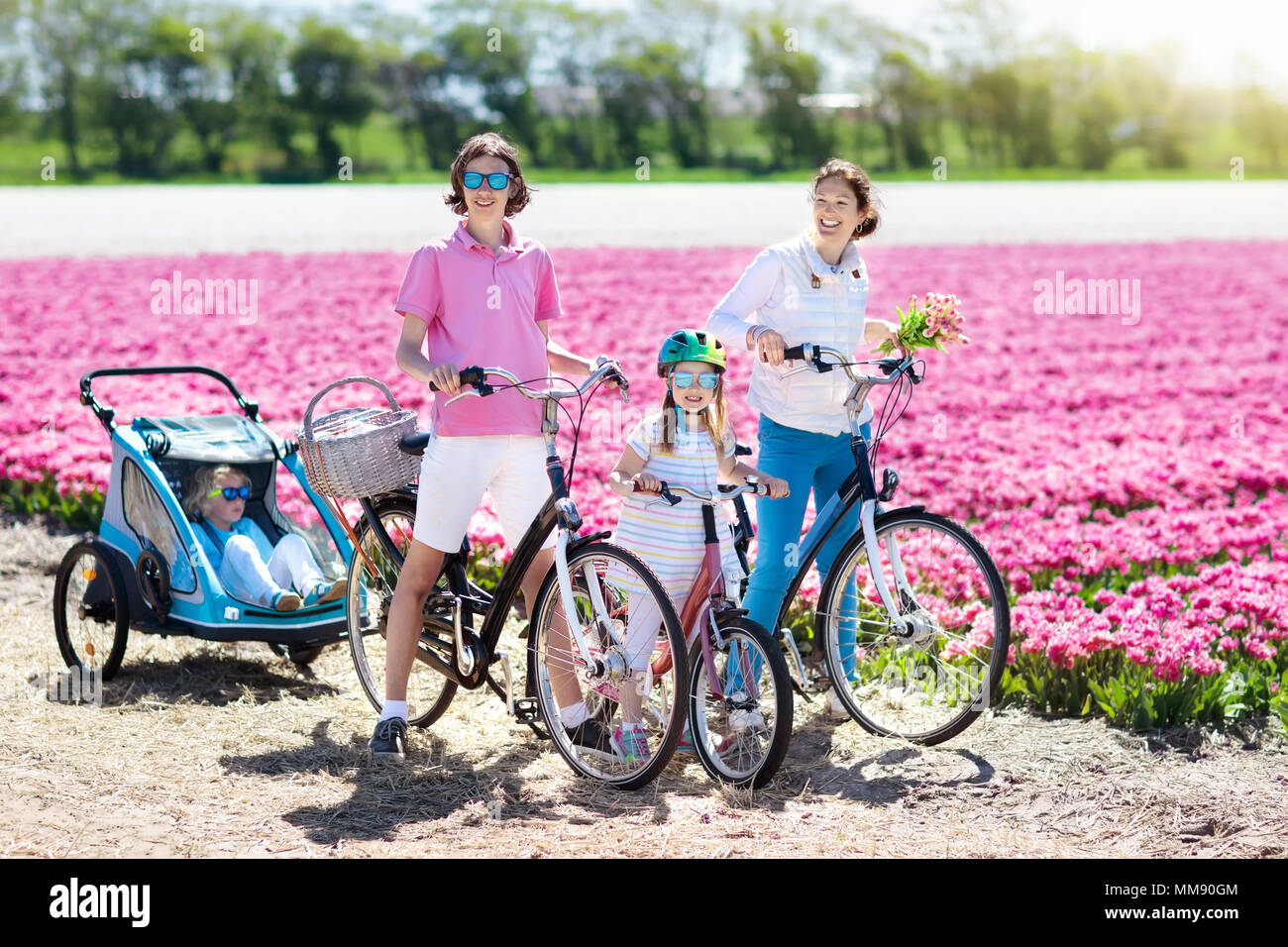 Happy Dutch family riding bicycle in tulip flower fields in Netherlands. Mother and kids on bikes at blooming tulips in Holland. Baby in bike trailer. Stock Photo
