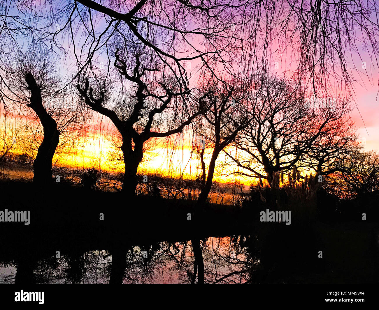Dramatic winter sunsets with trees, Cheshire, England, UK - Stock Image
