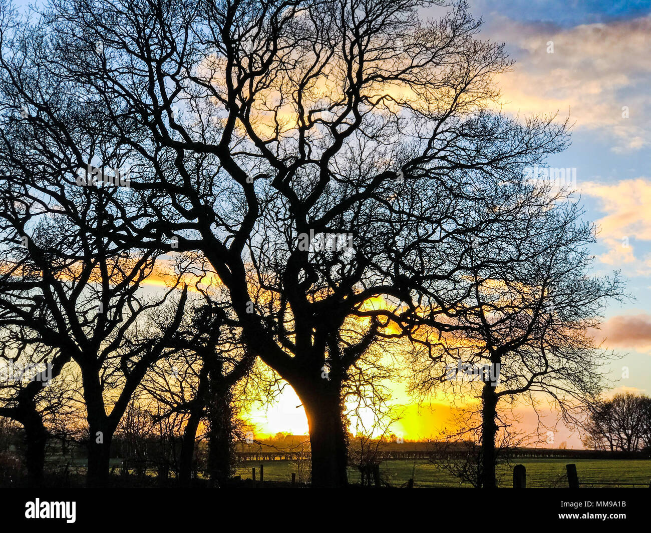 Dramatic Sunset behind trees in winter, Cheshire, England, UK - Stock Image