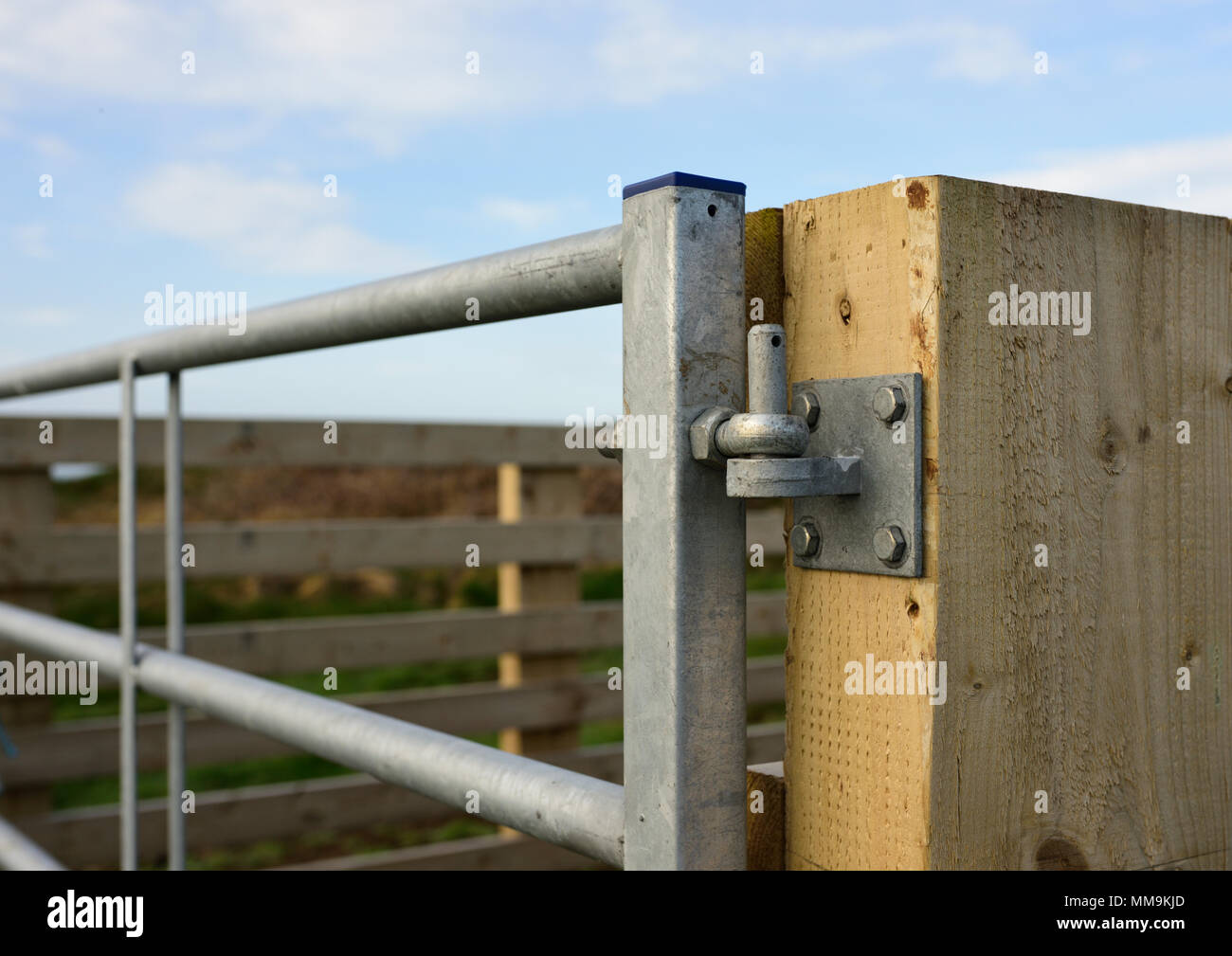 Timber and galvanized steel Sheep pen hinge detail in north wales uk