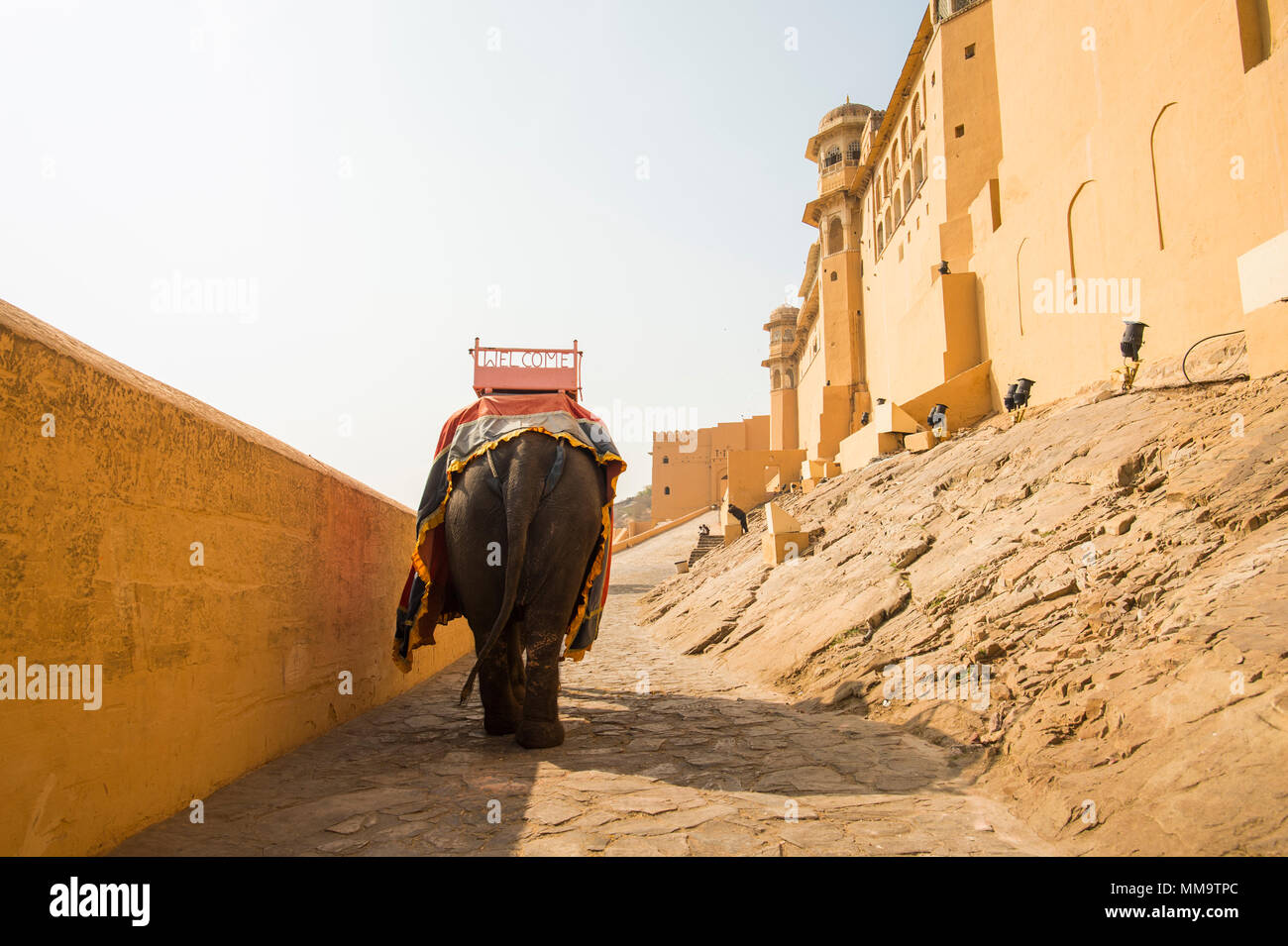 A decorated elephant is walking to Amber Fort in Jaipur, India. Elephant rides are popular tourist attraction in Amber Fort. - Stock Image