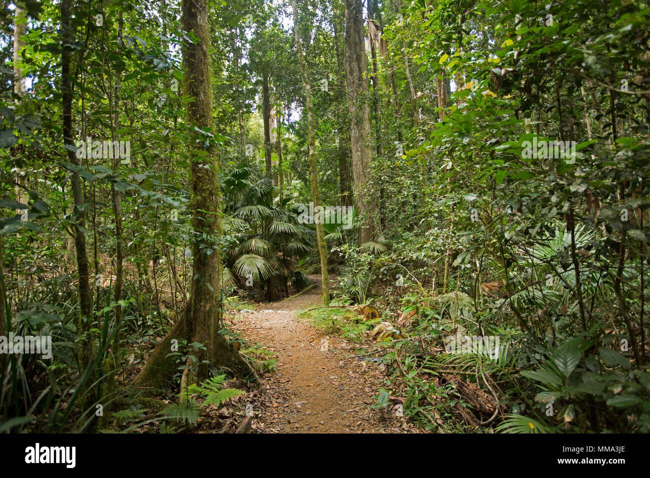 Walking track through dense emerald green vegetation of rainforest in Eungalla National Park Queensland Australia - Stock Image