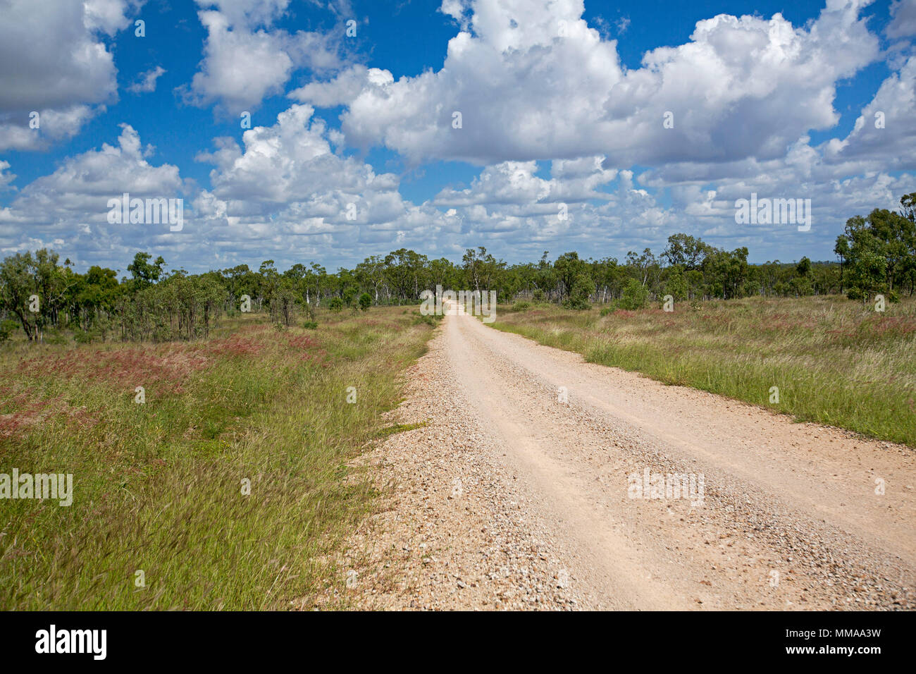 Gravel road slicing through landscape of red and green grasses hemmed by trees under blue sky at Homevale National Park in Queensland Australia - Stock Image