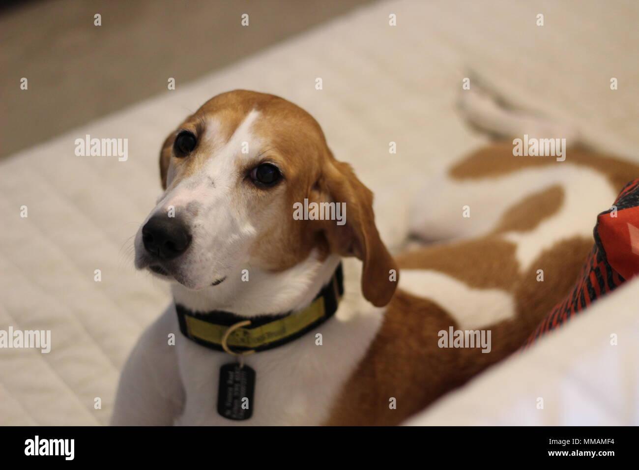 Cute rescue dog - Stock Image