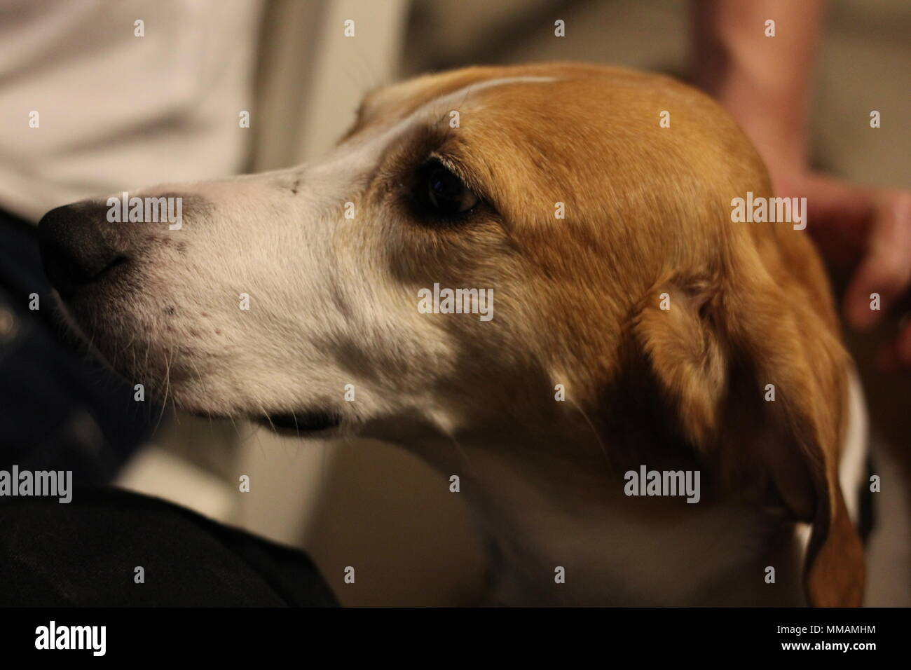 Woof Dog Stock Photos & Woof Dog Stock Images - Page 2 - Alamy