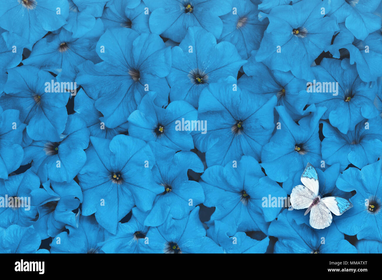 Creative layout made of blue flowers with white butterfly flat lay creative layout made of blue flowers with white butterfly flat lay nature concept izmirmasajfo
