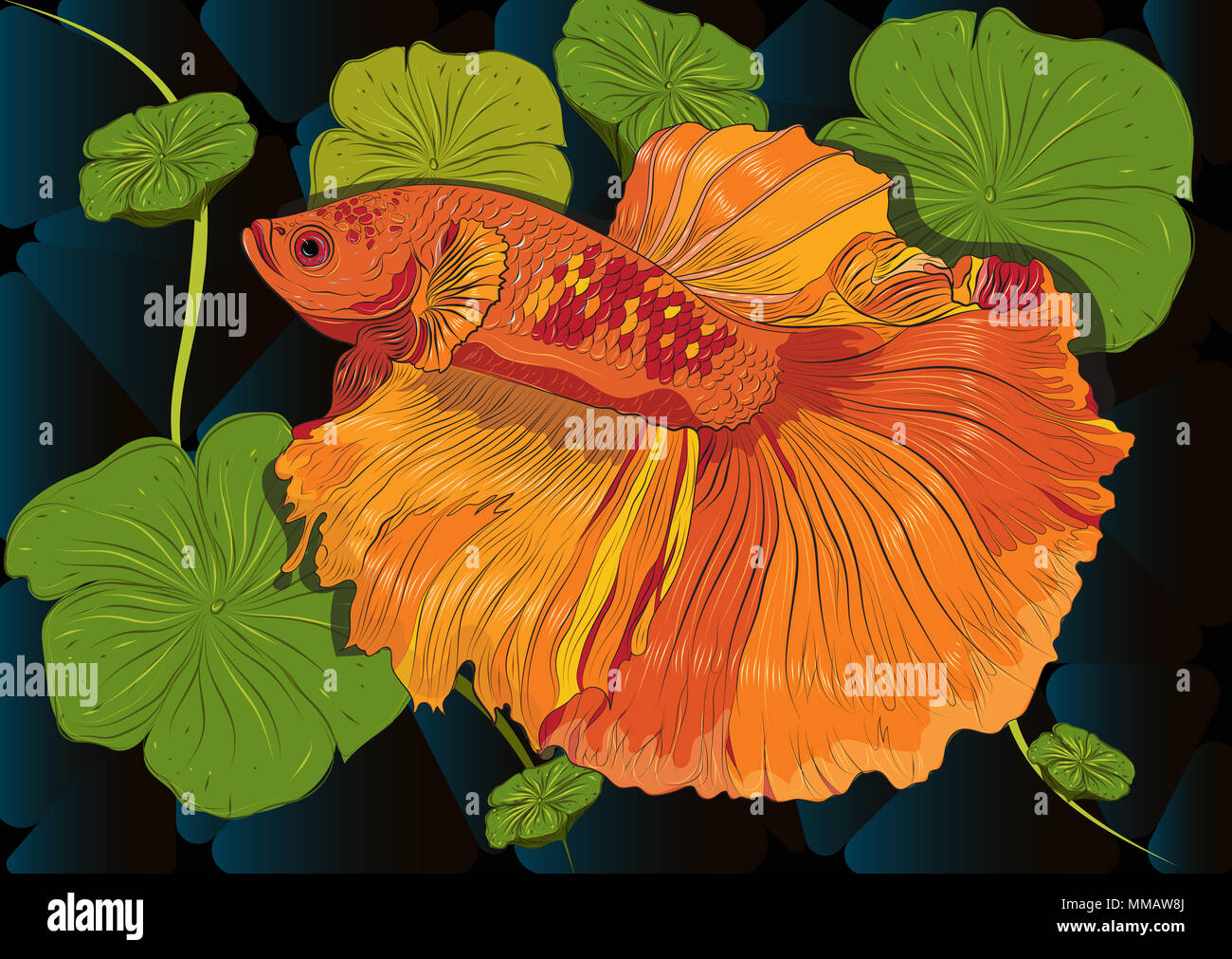 Vector color drawing of  betta or simese fighting fish illustation. Stock Photo