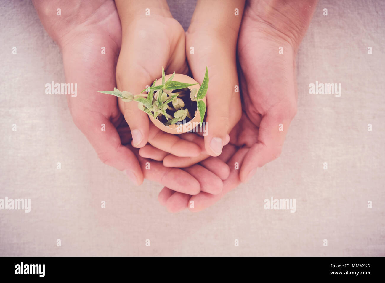 adult and child hands holding seedling plants in eggshells, eco gardening,  montessori, education, reuse, CSR concept - Stock Image