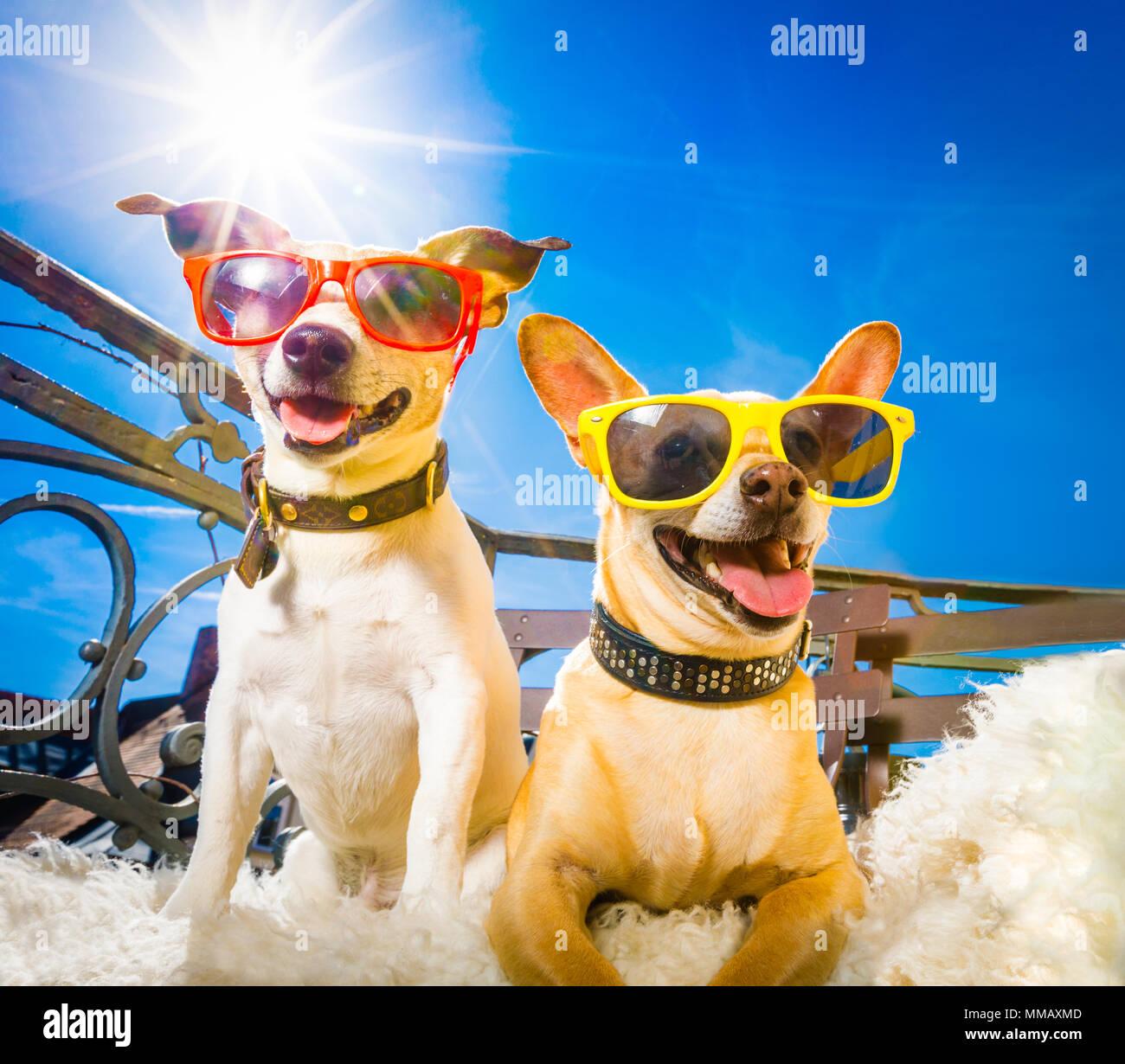 Couple Enjoying Their Summer Holidays Stock Photo: Couple Of Dogs With Sunglasses At Balcony Enjoying The Sun