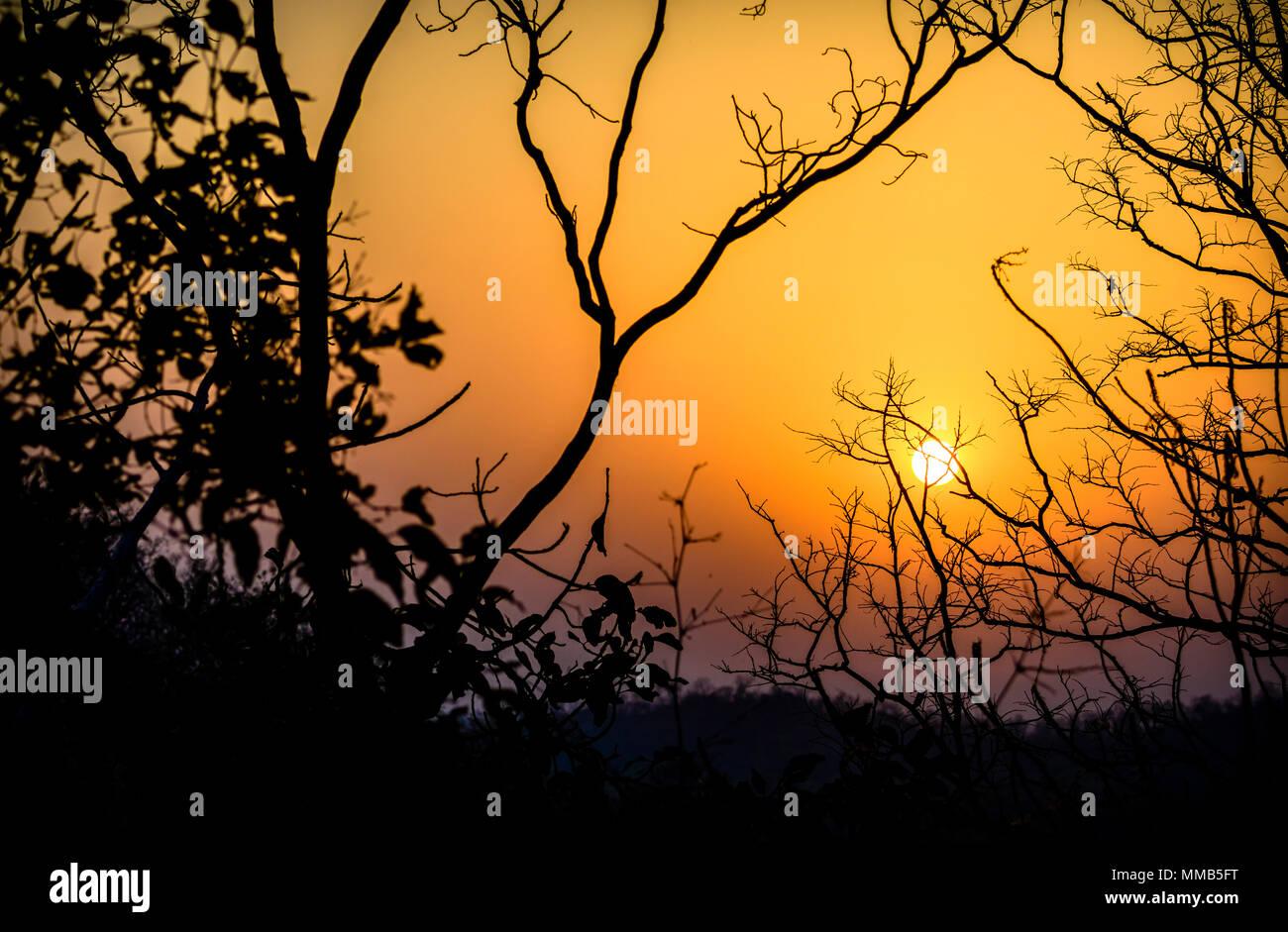 Sun rising in Bandhavgarh National Park, Madhya Pradesh India Stock Photo