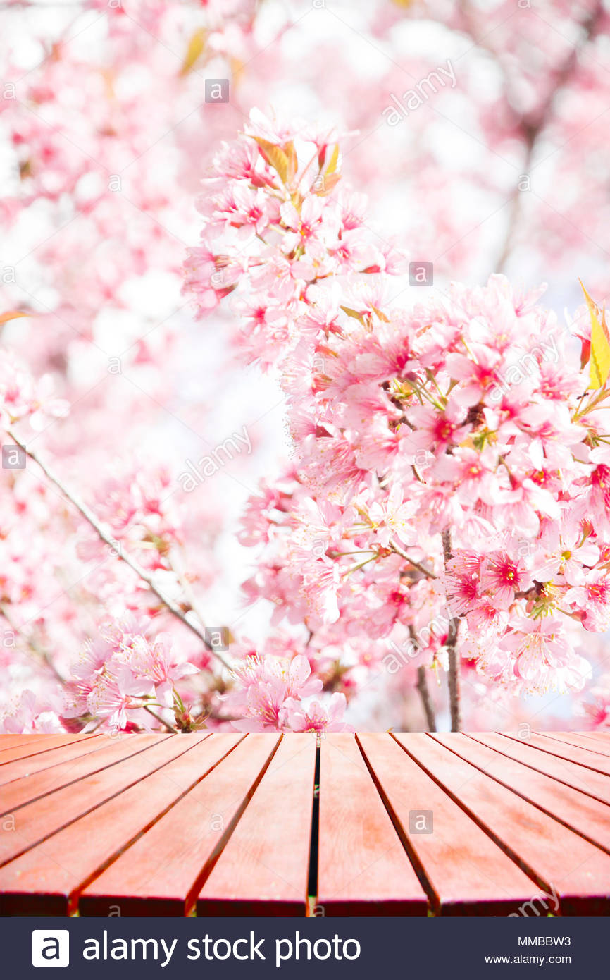 Empty Wood Table For Display Product And Pink Sakura Flower Nature