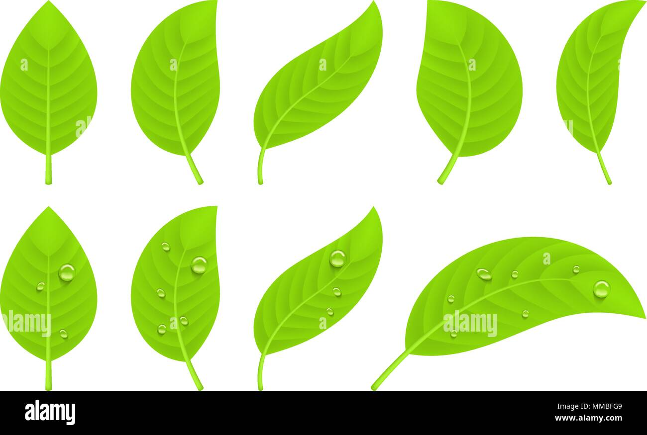 Green realistic leaves - Stock Image