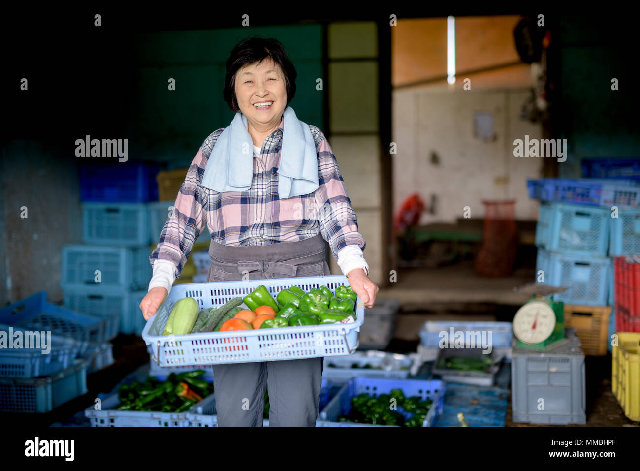 Woman with black hair wearing checkered shirt standing in front of barn, holding blue plastic crate with fresh vegetables, smiling at camera. - Stock Image