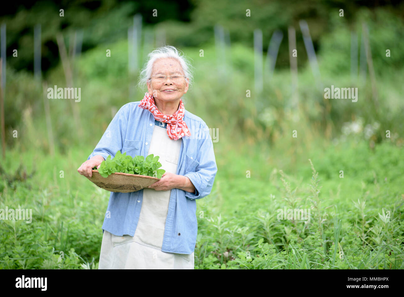 Elderly woman with grey hair standing in a garden, holding basket with fresh vegetables, smiling at camera. - Stock Image