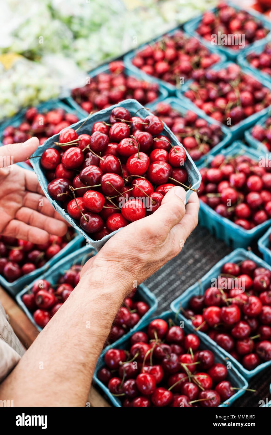 High angle  close up of person holding punnet with fresh red cherries at a fruit and vegetable market. - Stock Image
