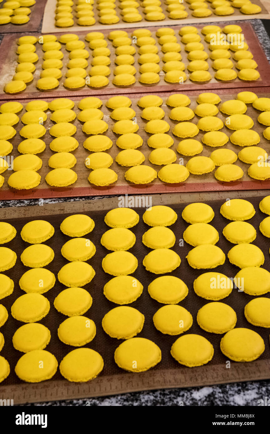 Trays of small round yellow baked biscuits or macarons. Overhead view. - Stock Image