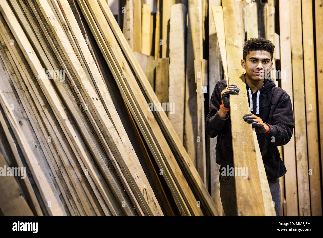 Young man wearing work gloves standing next to a stack of wooden planks in a warehouse, carrying long pieces of wood, looking at camera. - Stock Image