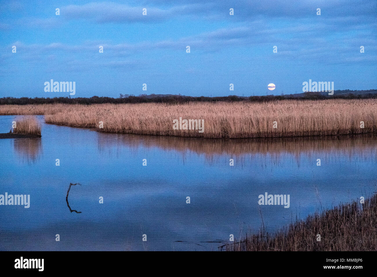 A full moon and water pool in a wetlands nature reserve, with reflections on the water surface of a large flock of birds in the air, a murmuration - Stock Image