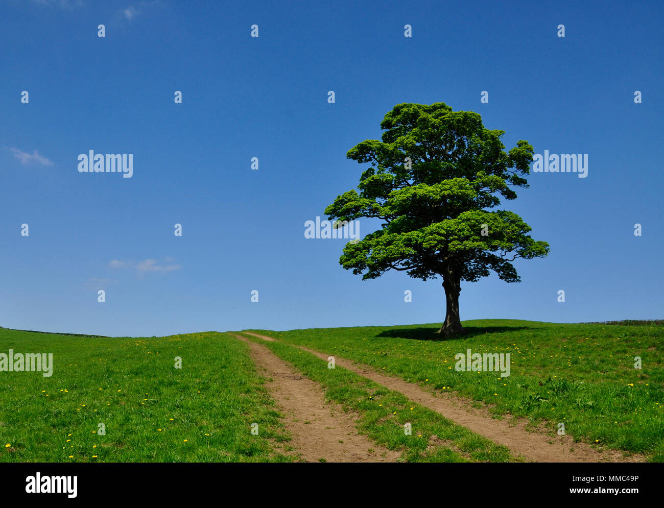 Single tree Upleatham Village Yorkshire Stock Photo