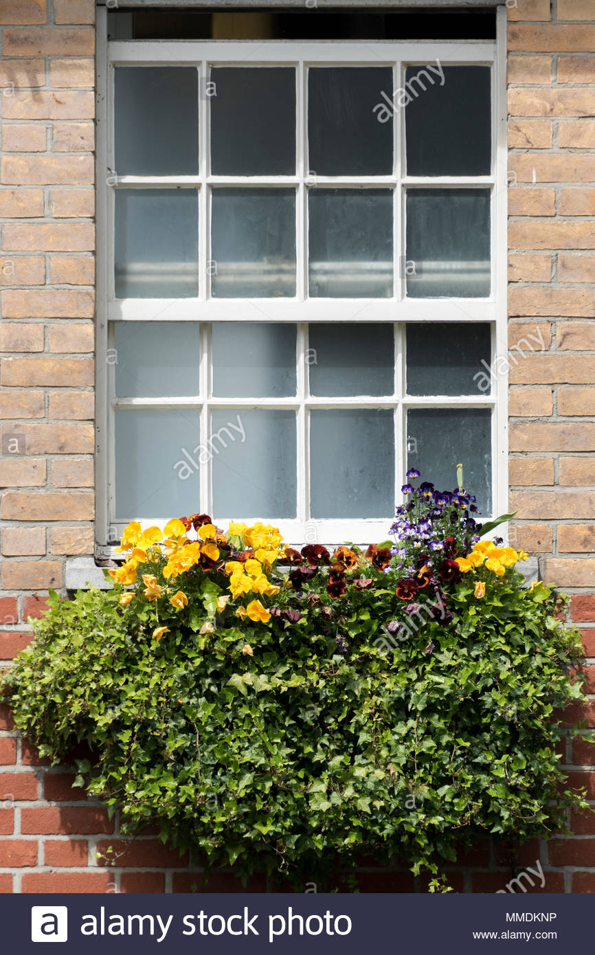 Looking up at a slightly open sash window and a flower filled window box underneath, Dorset, England, UK Stock Photo