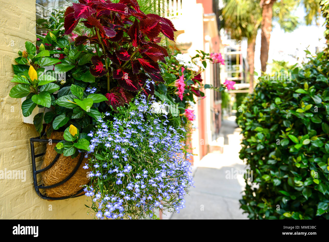 Flowering Street - Colorful Window Box flowers on a historic Charleston street in Downtown Charleston, South Carolina, USA. - Stock Image