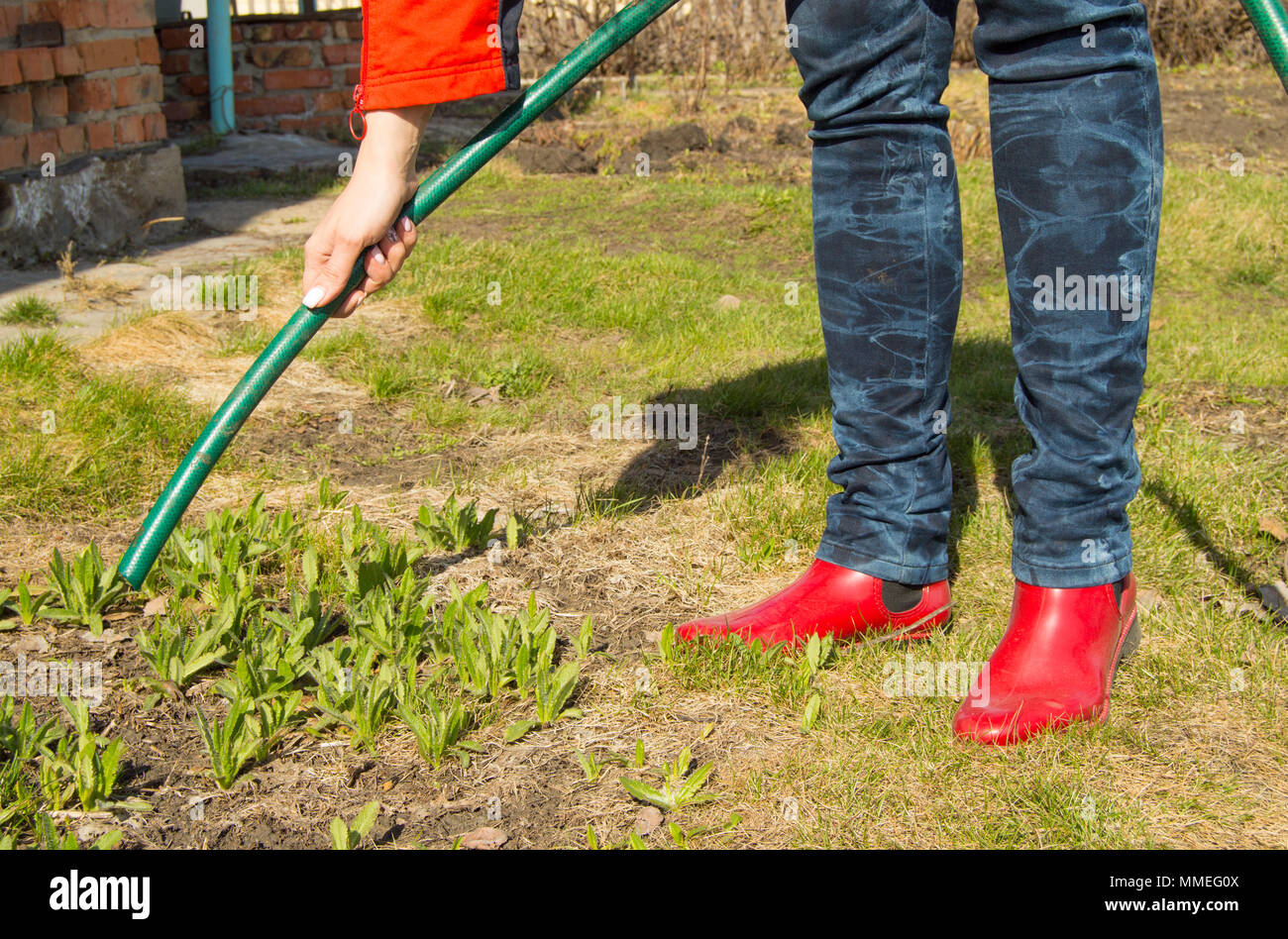 Beautiful women's hand with manicure holding a hose for watering plants and flowers in the garden - Stock Image