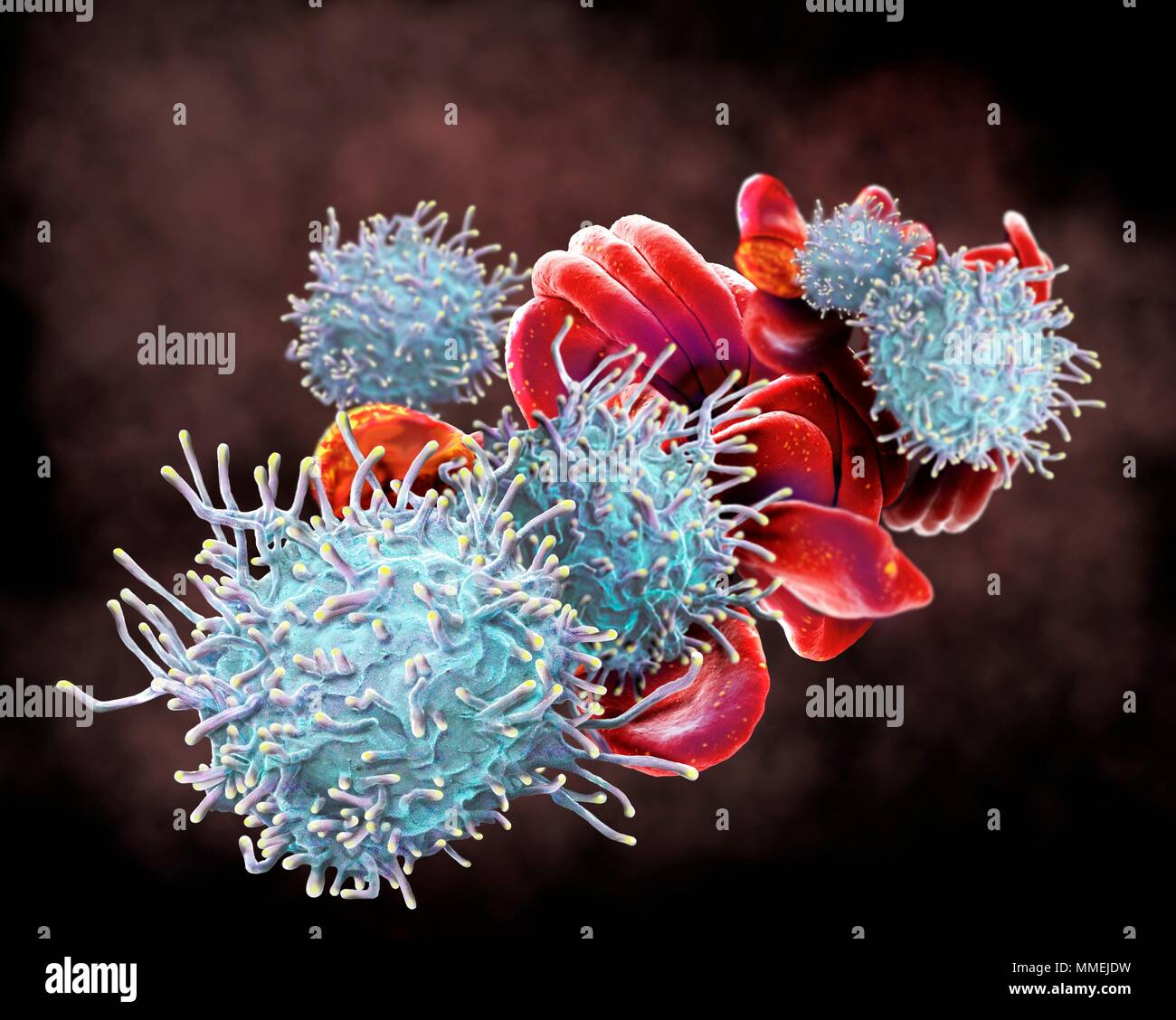 Activated T lymphocytes and red blood cells (RBCs). Coloured scanning electron micrograph (SEM) of activated T lymphocytes and RBCs from a human blood Stock Photo