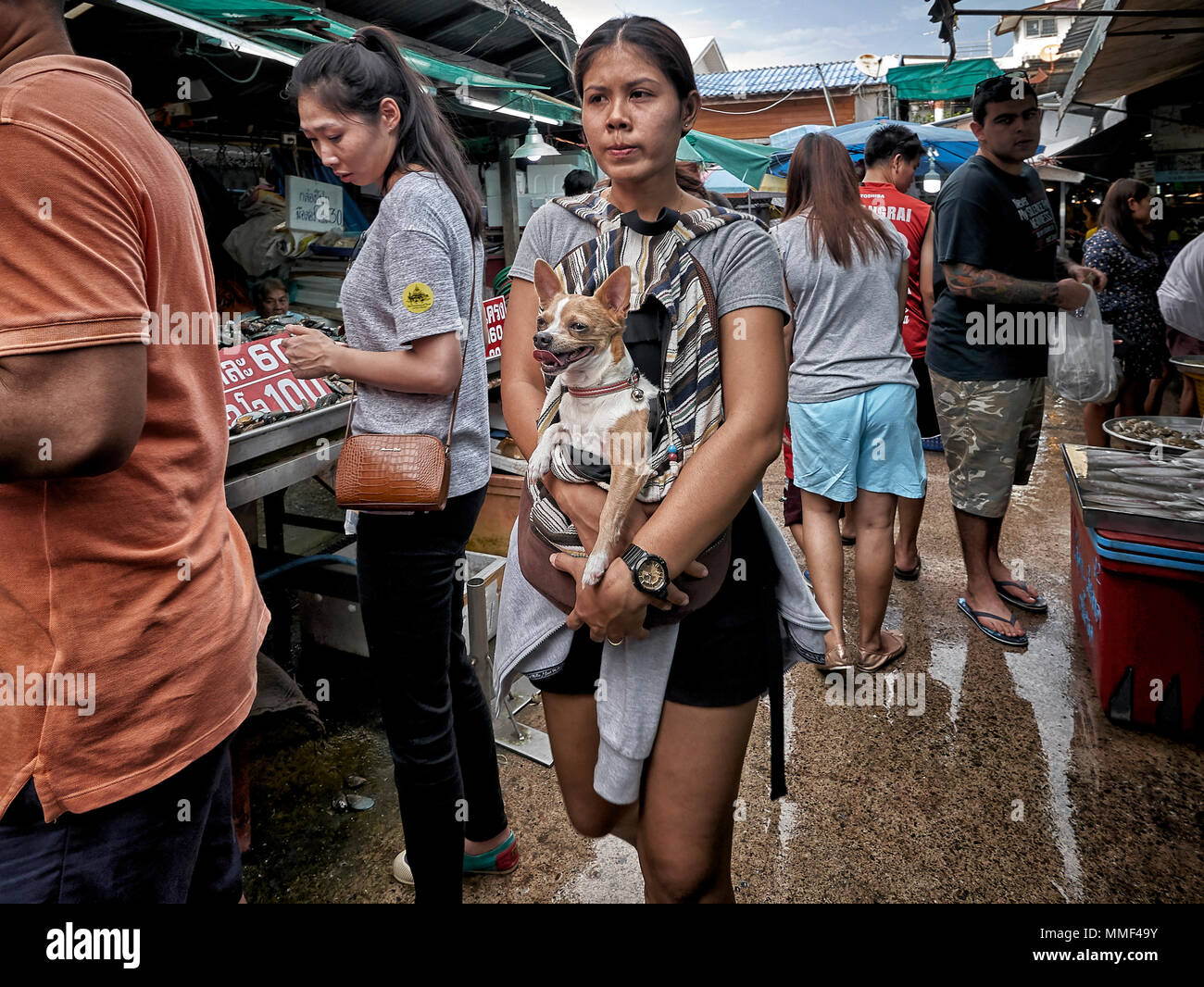 Owner carrying Dog. pet Chihuahua carried by owner through a street market. Thailand Southeast Asia - Stock Image