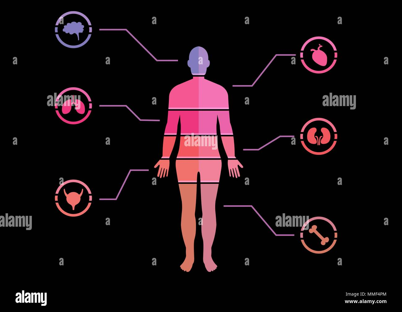 Human Body chart - Stock Image