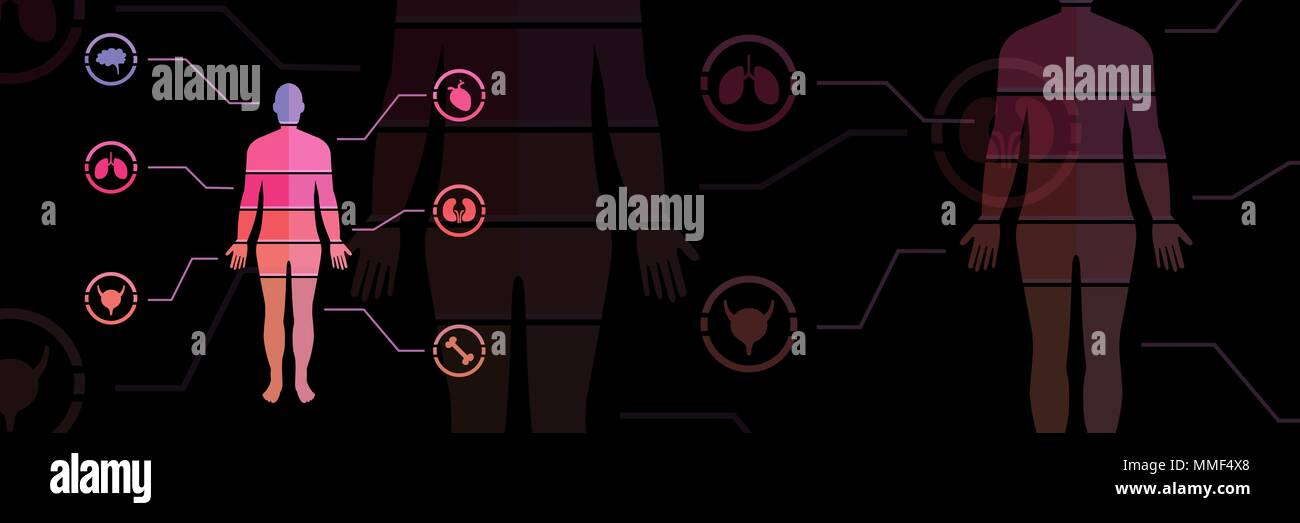 Human Body chart fading transition - Stock Image