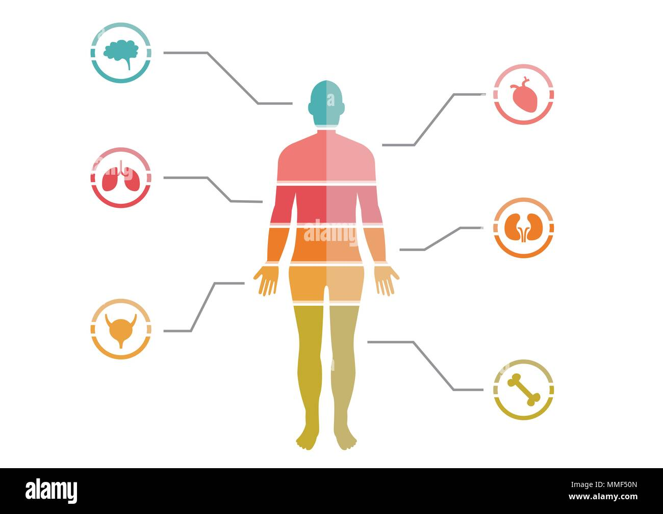 Colorful Human Body Chart - Stock Image