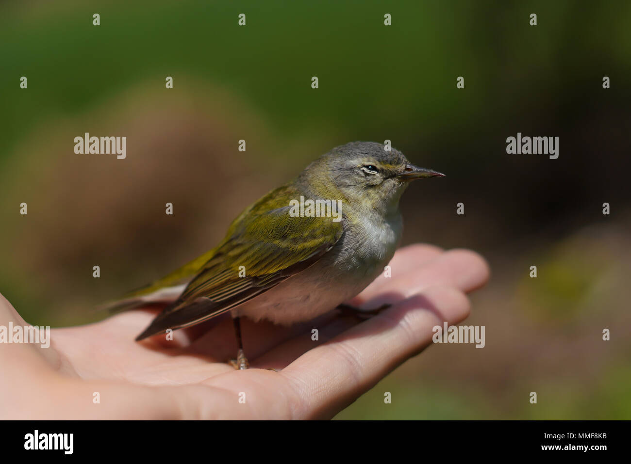 Friendly Finch Stock Photo