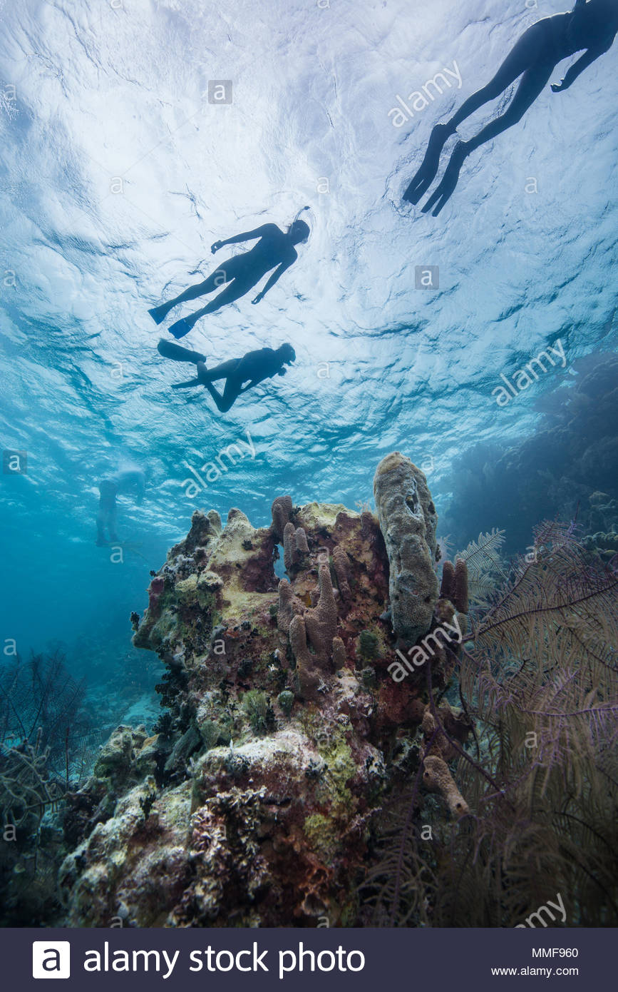 Snorkelers are silhouetted as they swim over corals at the Blue Hole. - Stock Image