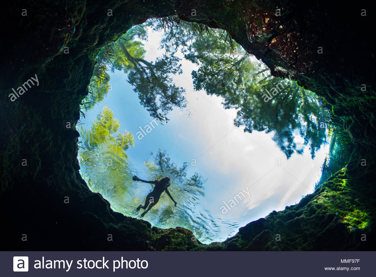 Looking up through the spring vent at Jug Hole as a silhouetted swimmer hovers. - Stock Image