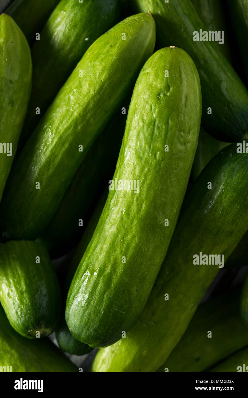 Raw Green Organic Baby Cucumbers Ready to Eat - Stock Image