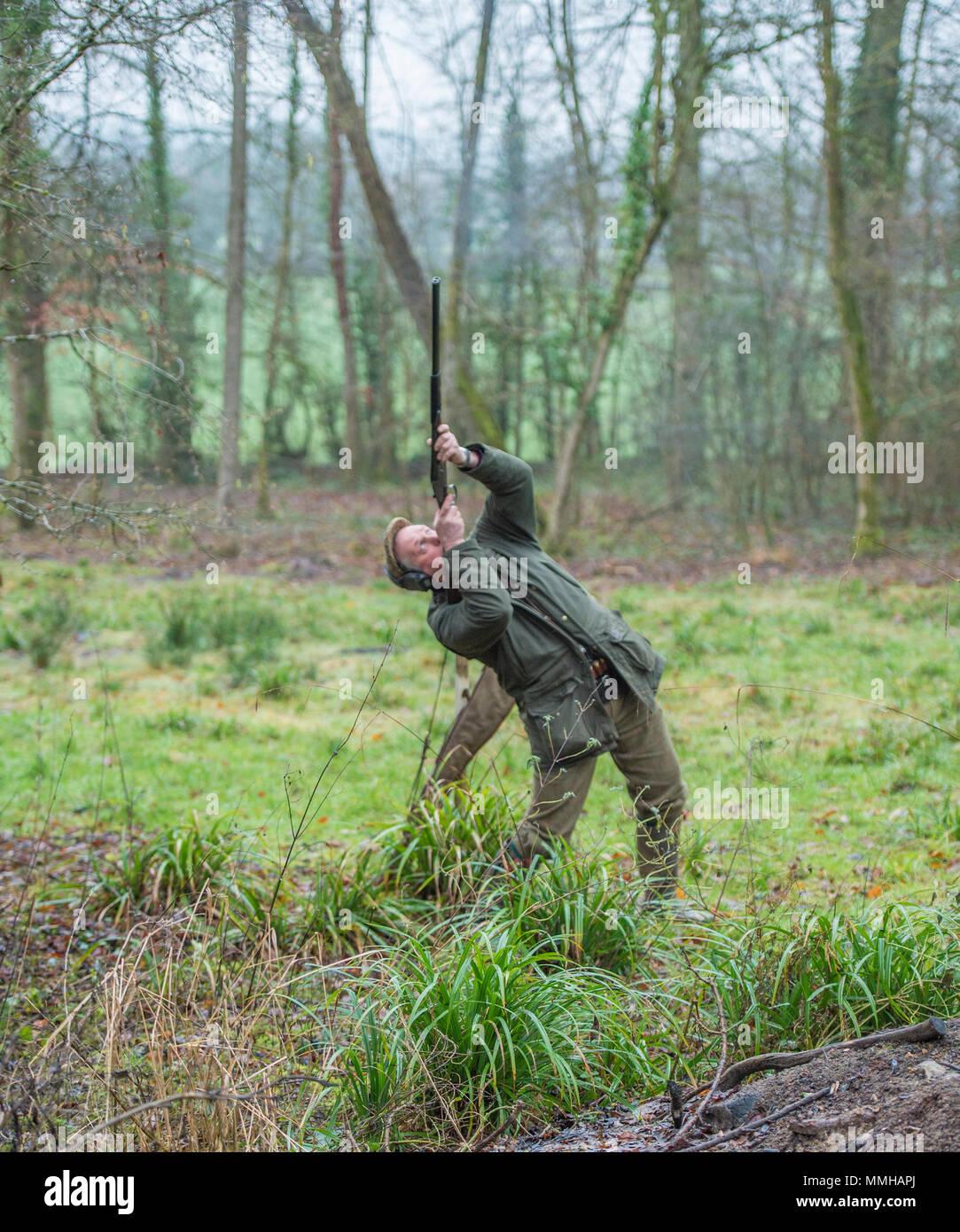man shooting pheasants - Stock Image