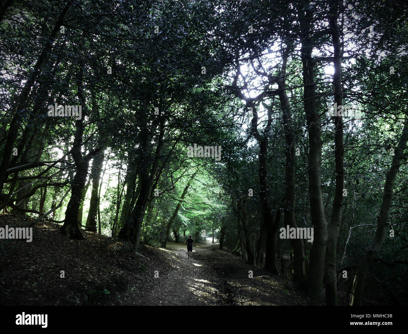 Fantasy woods of Sutton Park, Birmingham - Stock Image