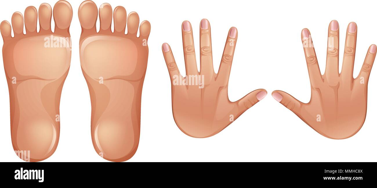 Human Anatomy Feet and Hands illustration - Stock Vector