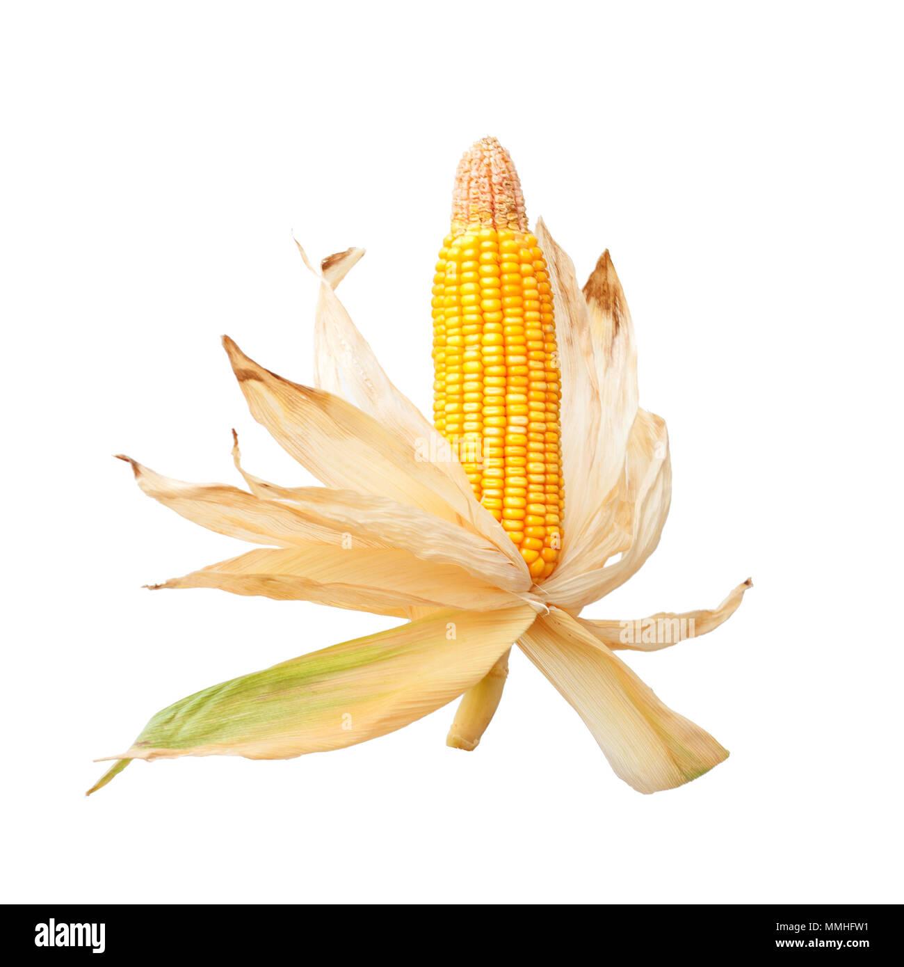 Corn cob isolated on white background - Stock Image