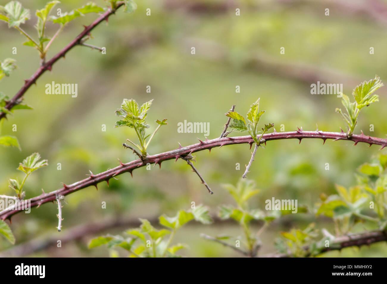 Autumn Bramble Leaves Stock Photos Amp Autumn Bramble Leaves