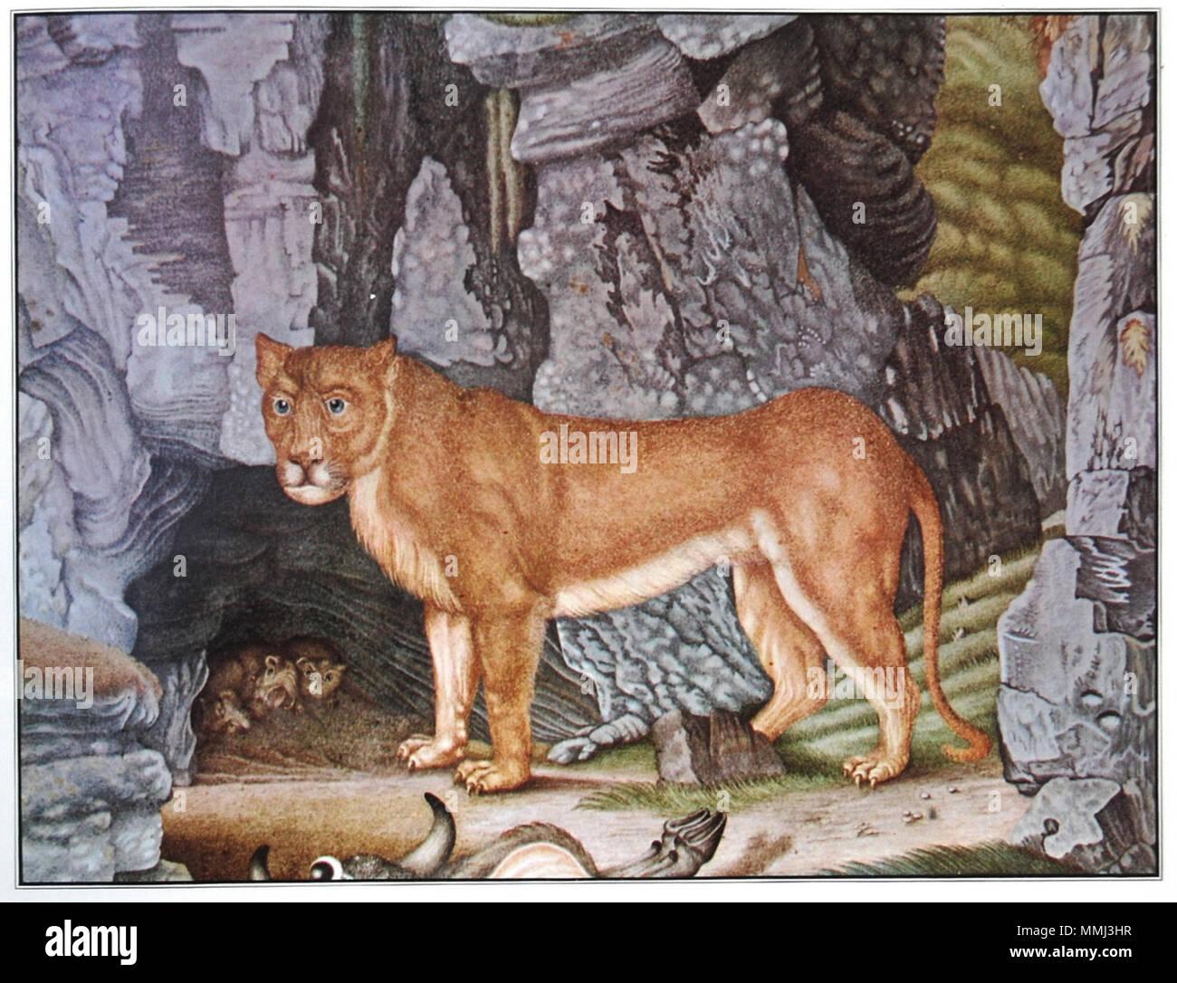 Die Löwin Stock Photo