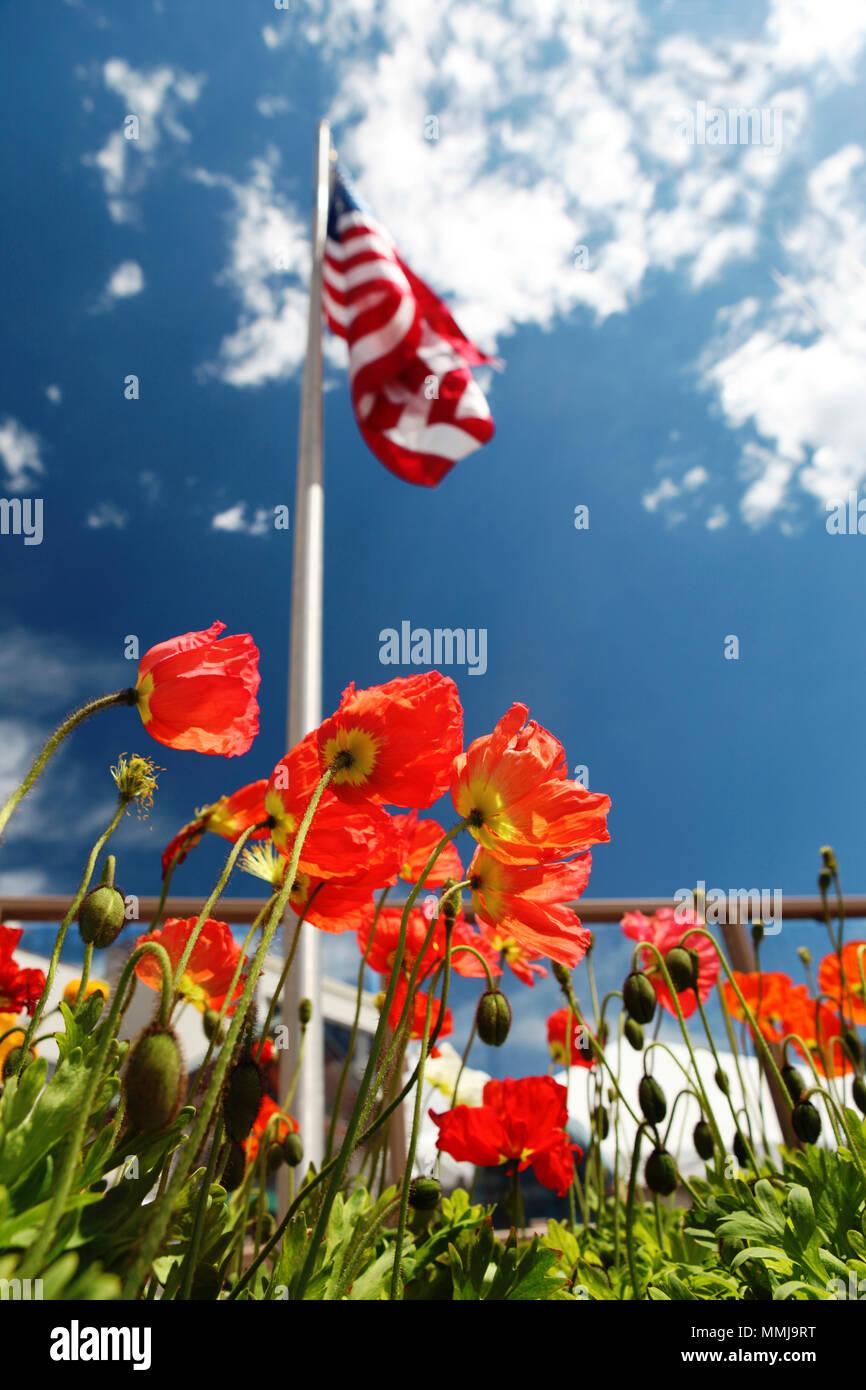 American flag on poppy fields usa memorial day concept stock photo american flag on poppy fields usa memorial day concept publicscrutiny Gallery