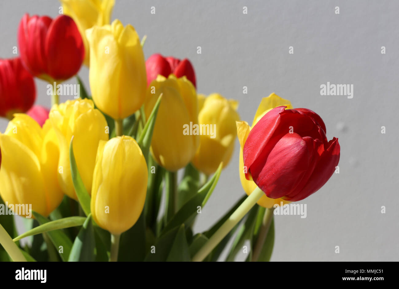 Closeup Of Red And Yellow Tulips In A Vase Photographed During A