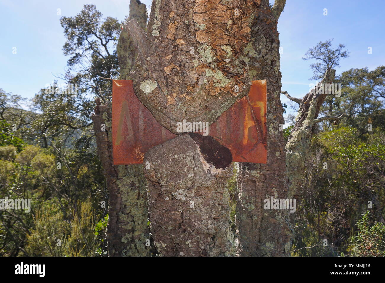 An old rusted metal sign engulfed by the growth of a cork oak tree, Darnius, Girona, Alt Emporda, Catalonia, Spain - Stock Image