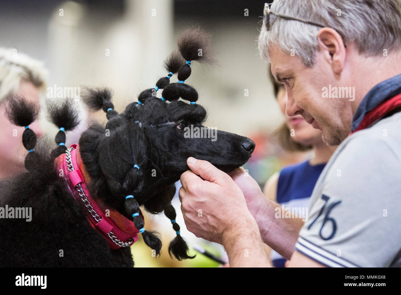 Dortmund, Germany. 12 May 2018. Standard Poodles before a competition. One of the largest dog and cat shows Hund & Katz takes place with more than 8000 dogs from 250 different breeds from 11 to 13 May at Westfalenhallen trade fair in Dortmund. Credit: 51North/Alamy Live News - Stock Image