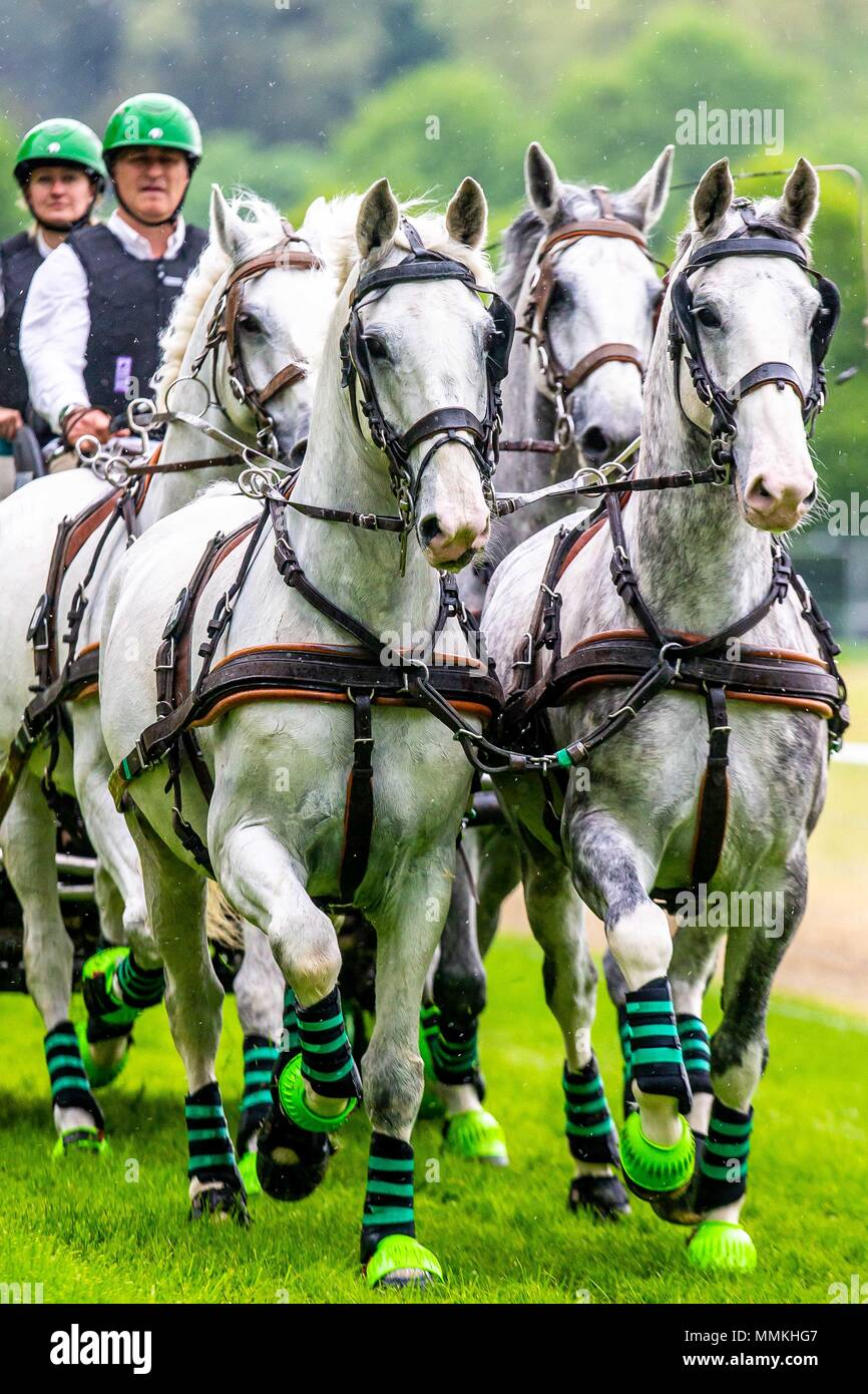 Windsor, UK. 12th May 2018. Day 4. Royal Windsor Horse Show. Windsor. Berkshire. UK.CAIO-CAI-Driving Marathon. Horse Four in Hand. Daniel Naprous. GBR.  12/05/2018. Credit: Sport In Pictures/Alamy Live News Credit: Sport In Pictures/Alamy Live News Credit: Sport In Pictures/Alamy Live News - Stock Image
