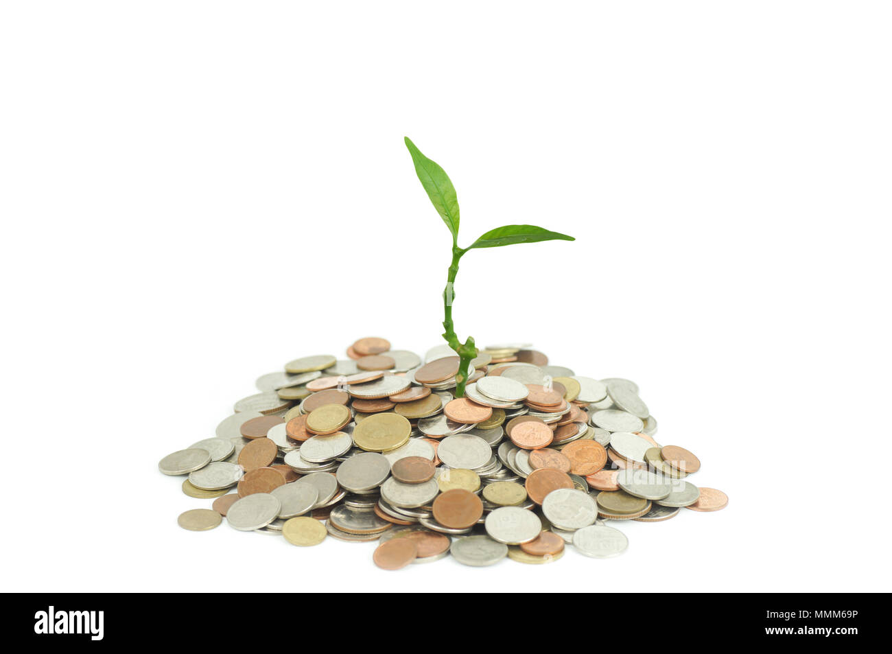 trees growing on coins / business success and save - Stock Image
